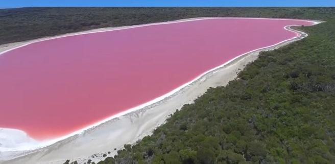 почему озеро Хиллер розовое