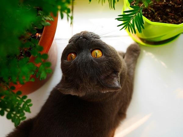 кот хулиганит