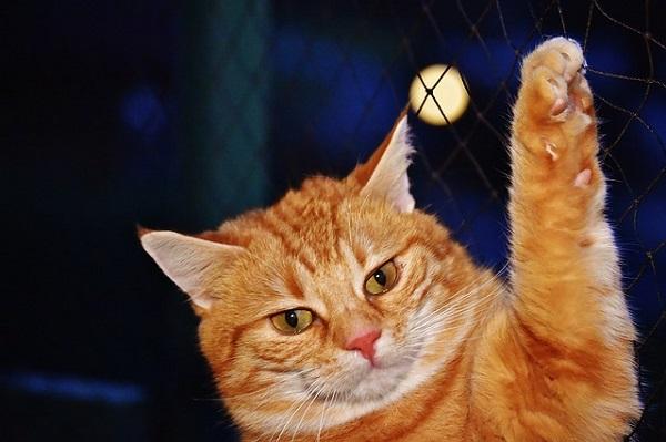 понять кота и простить
