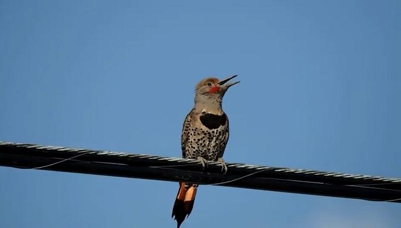 Почему птицы сидят на проводах